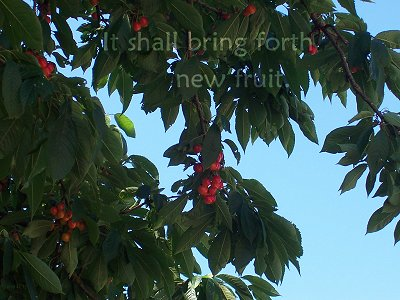 It shall bring forth new fruit