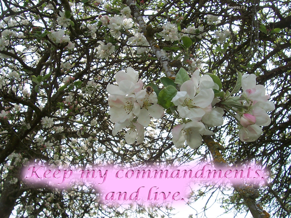 [The Scriptures say in Proverbs 7:2 -- Keep my commandments, and live]