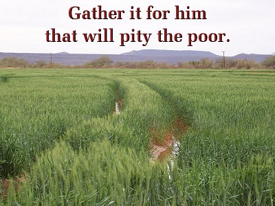 [Gather it for him that will pity the poor (Proverbx 28:8)]