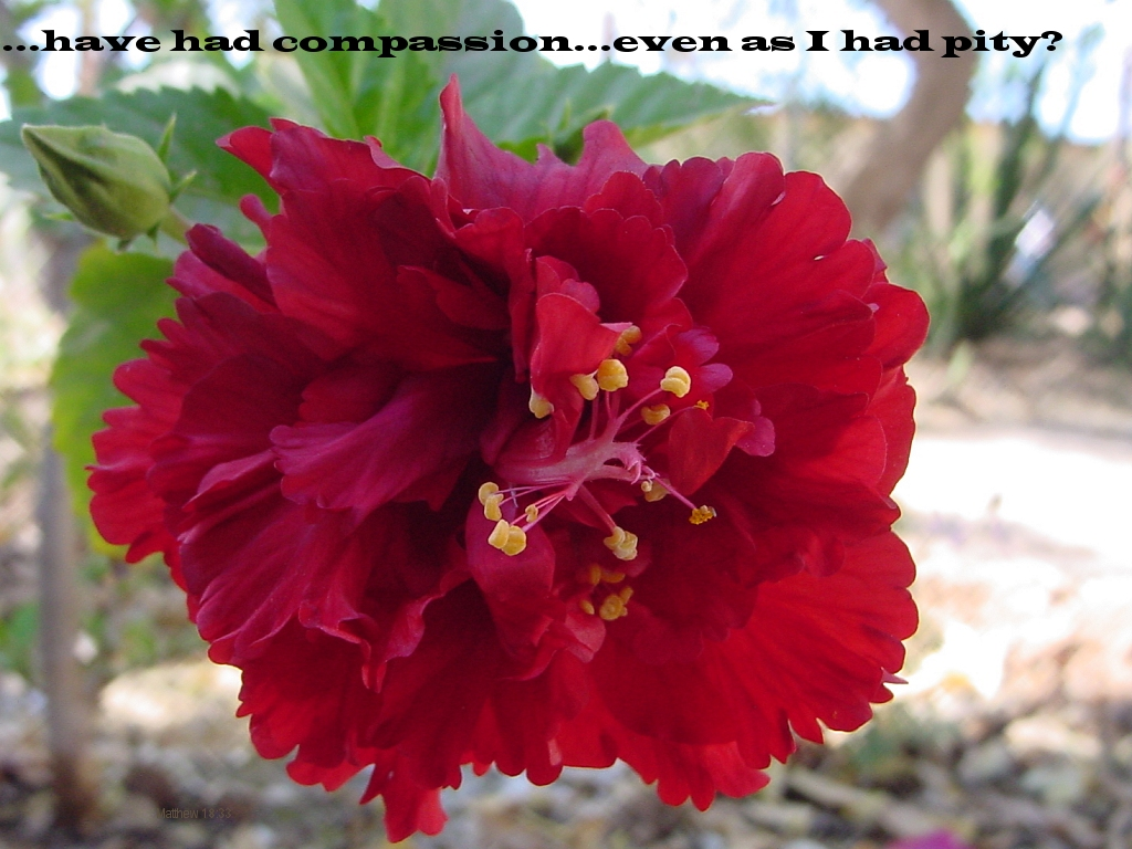 ...have had compassion...even as I had pity? (Matthew 18:33)