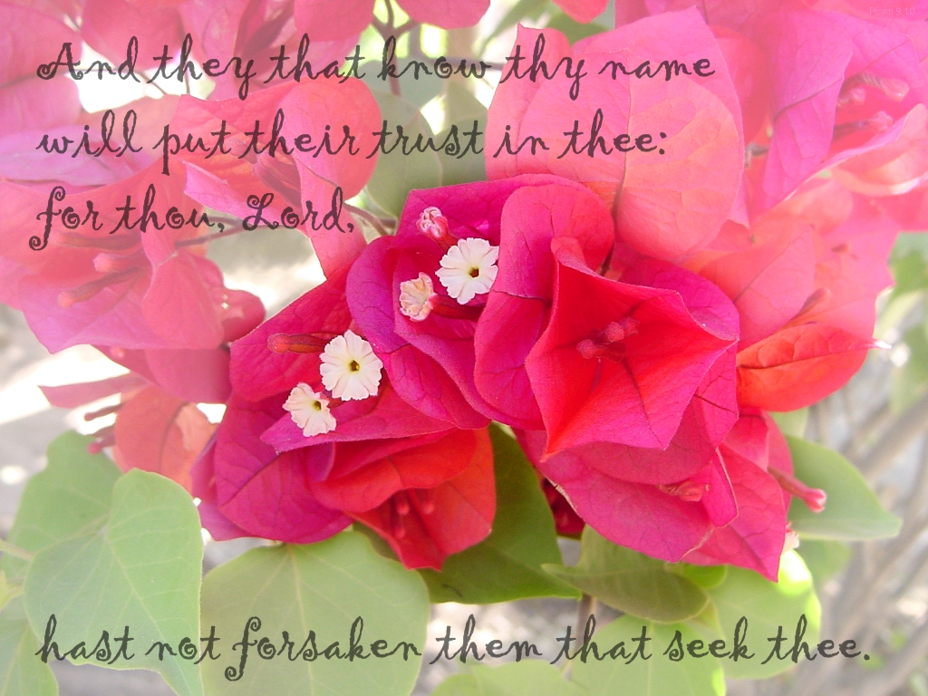 And they that know thy name will put their trust in thee: for thou, LORD, hast not forsaken them that seek thee (Psalm 9:10)